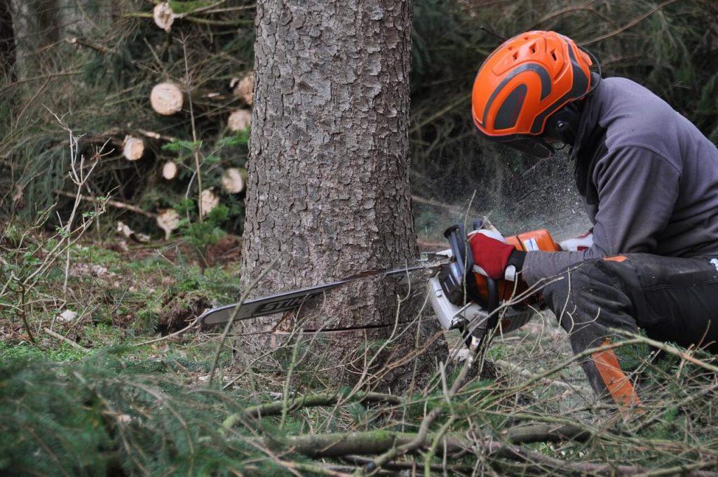 trädfällning luleå